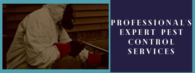 Professional's Expert Pest Control Services