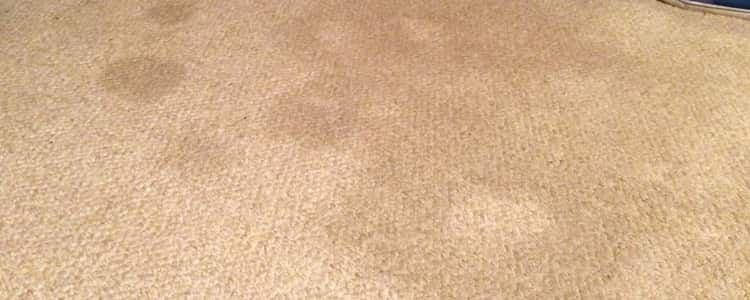 Remove Stubborn Stain from the carpet service